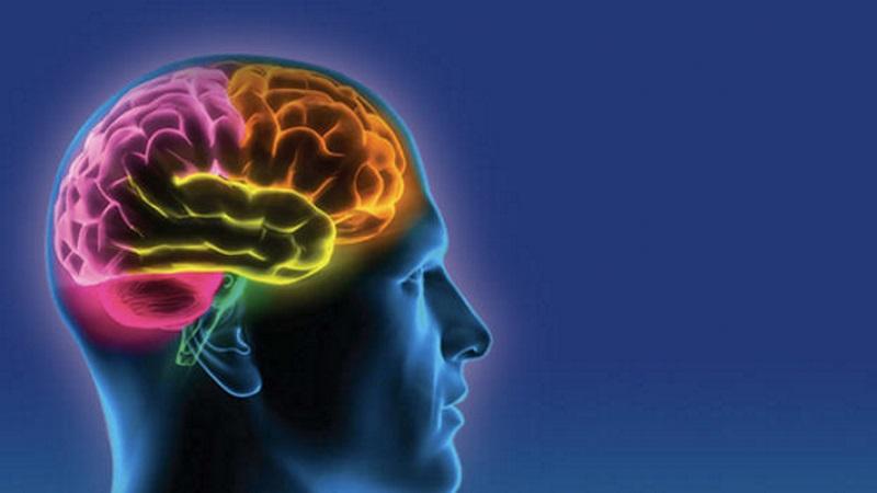 A magnézium és az agy